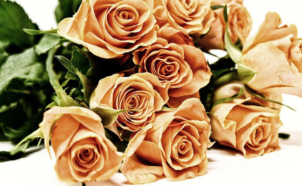 Roses, Flowers, Blossom, Bloom, Nature, Rose Blooms
