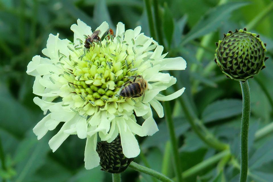 Shed Head, Plant, Botanical Garden, Blossom, Bloom