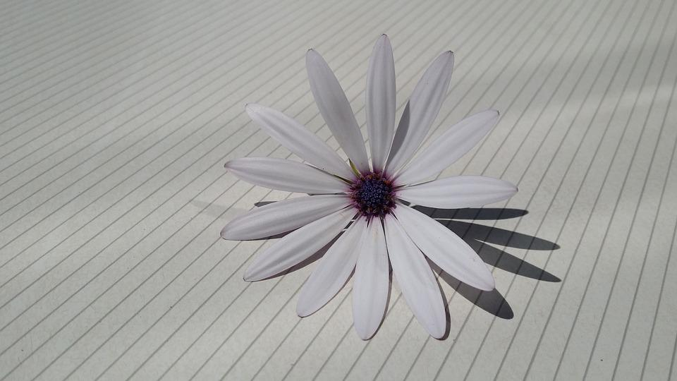 Blossom, Bloom, Cape Basket, White, Spain