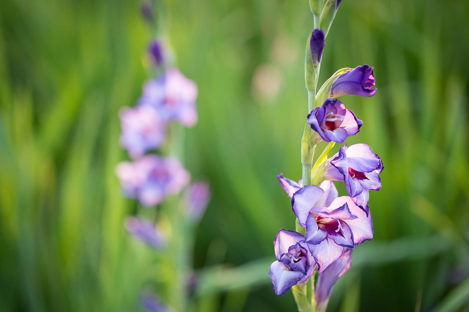 Flower, Plant, Outdoors, Nature, Bloom, Spring, Blossom