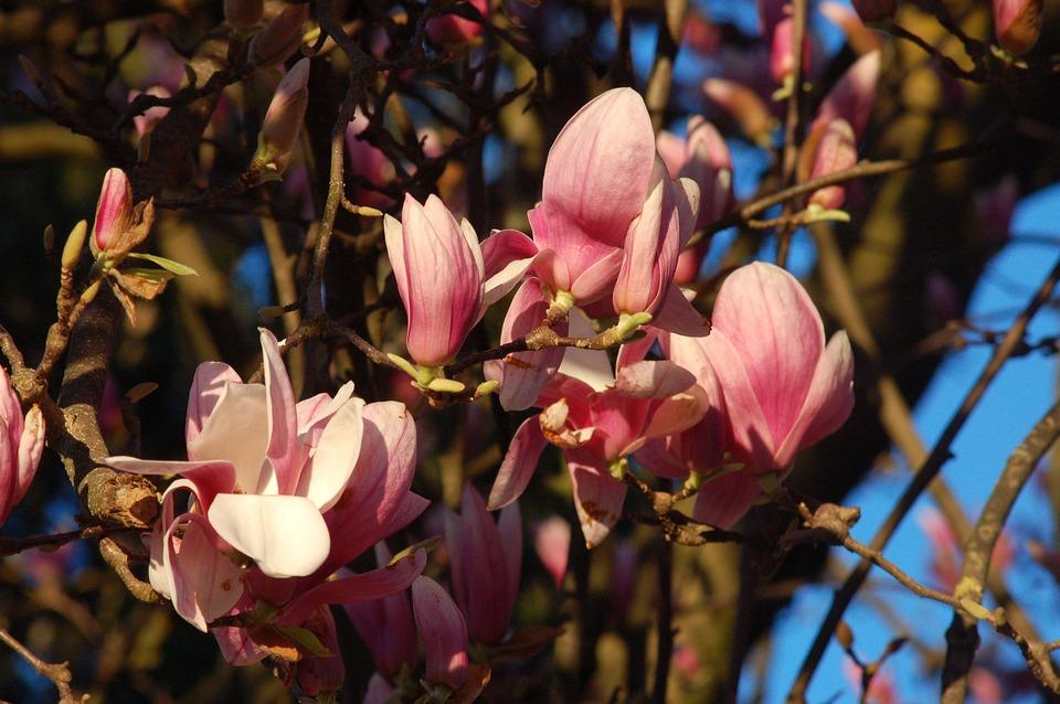 Flowers, Bloom, Spring, Petals