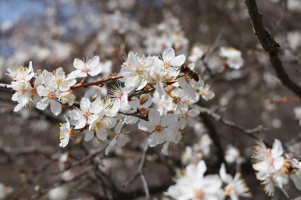 Crimea, Forest, Flowers, Spring, Nature, Bloom, Stroll