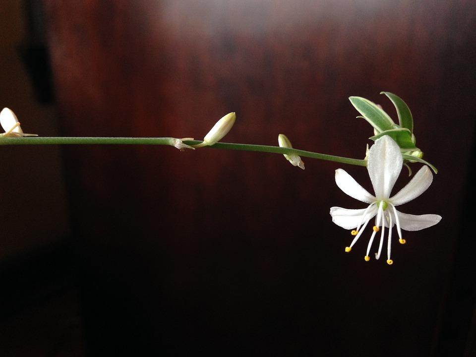 Flower, Bloom, Blossom, Springtime, Freshness, Youth