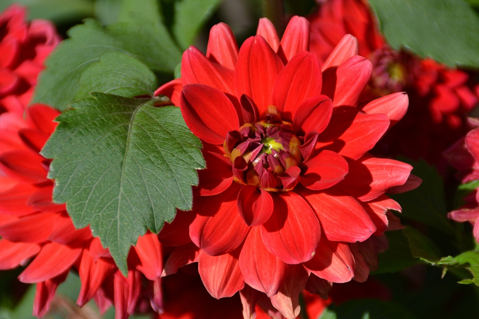 Flower, Red, Love, Garden, Summer, Bloom, Blossom