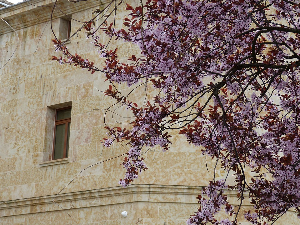 Salamanca, Spain, Spring, Tree, Blossom, Bloom