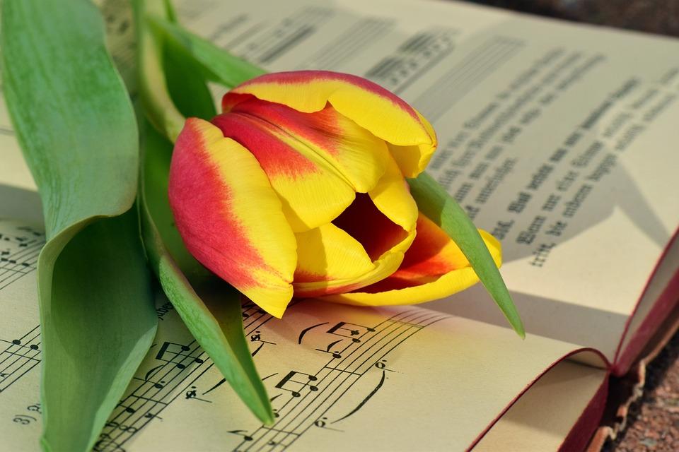 Book, Tulip, Romantic, Blossom, Bloom, Tulpenbluete