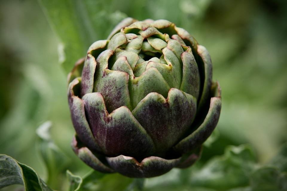 Artichoke, Blossom, Bloom, Vegetables, Food