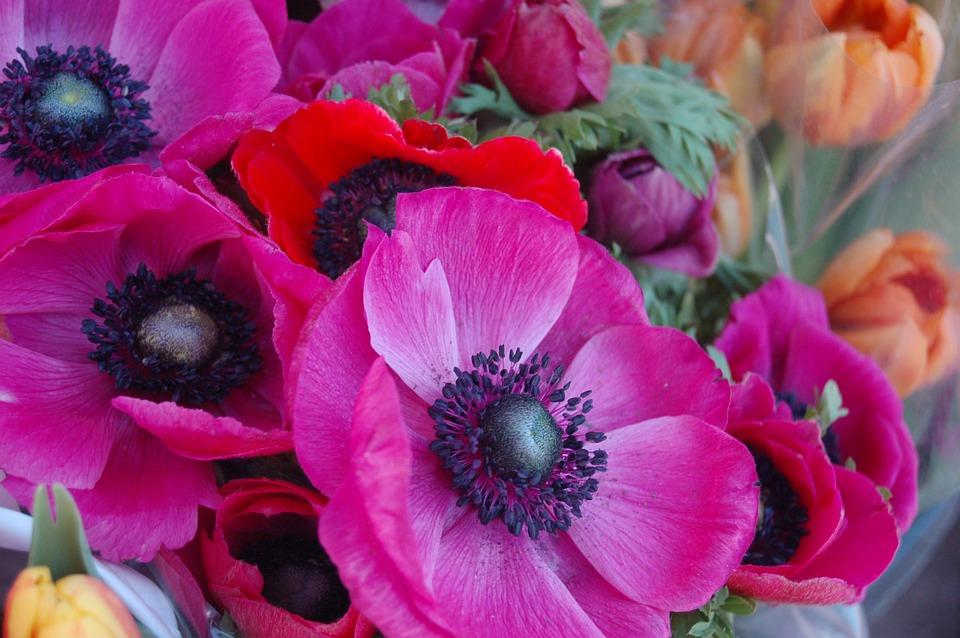 Flower, Floral, Summer, Bloom, Wallpaper