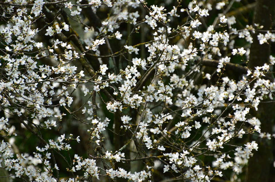 Spring, Blossom, Bloom, White, Garden, Nature, Blooming