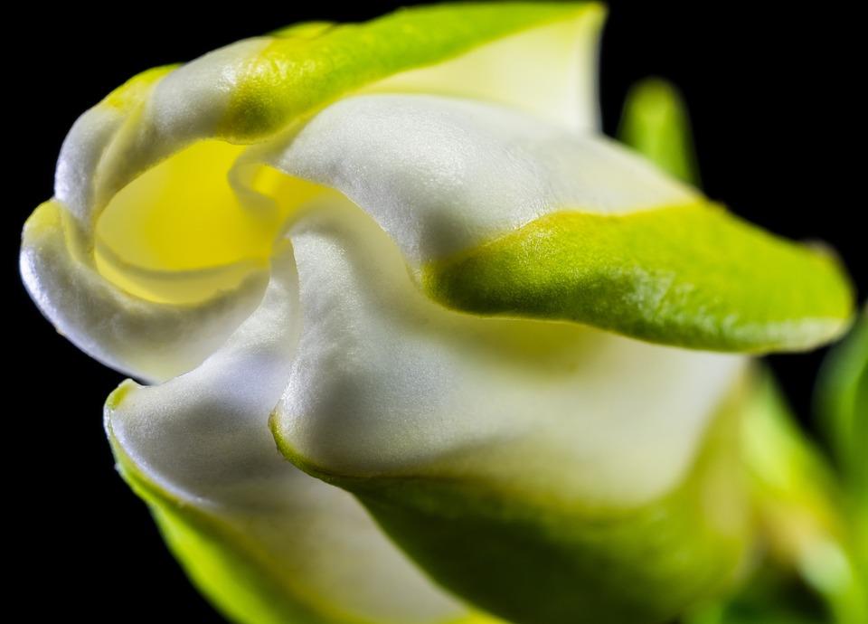 Blossom, Bloom, Flower, White Green