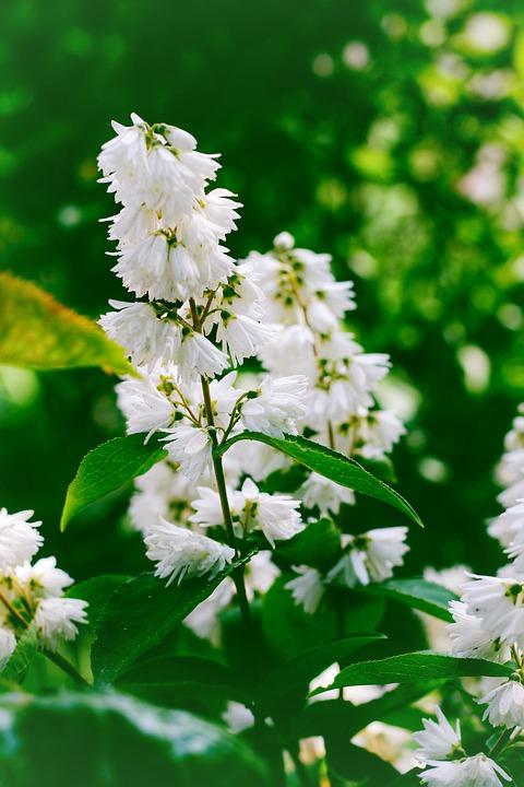 Flower, White, Green, Bloom, Garden, Flora, Macro