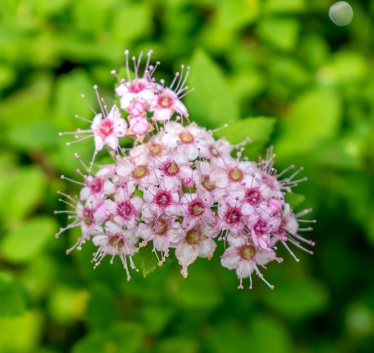 Flower, White, Blossom, Bloom, Botany, Petals