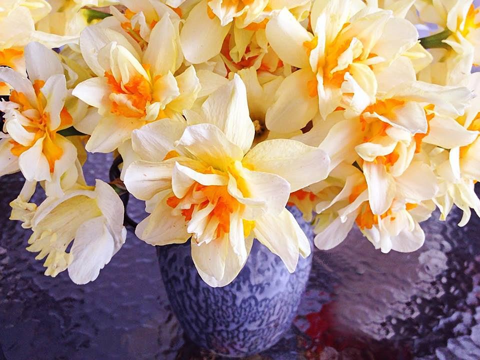 Yellow Flower, Spring, Summer, Nature, Fresh, Bloom