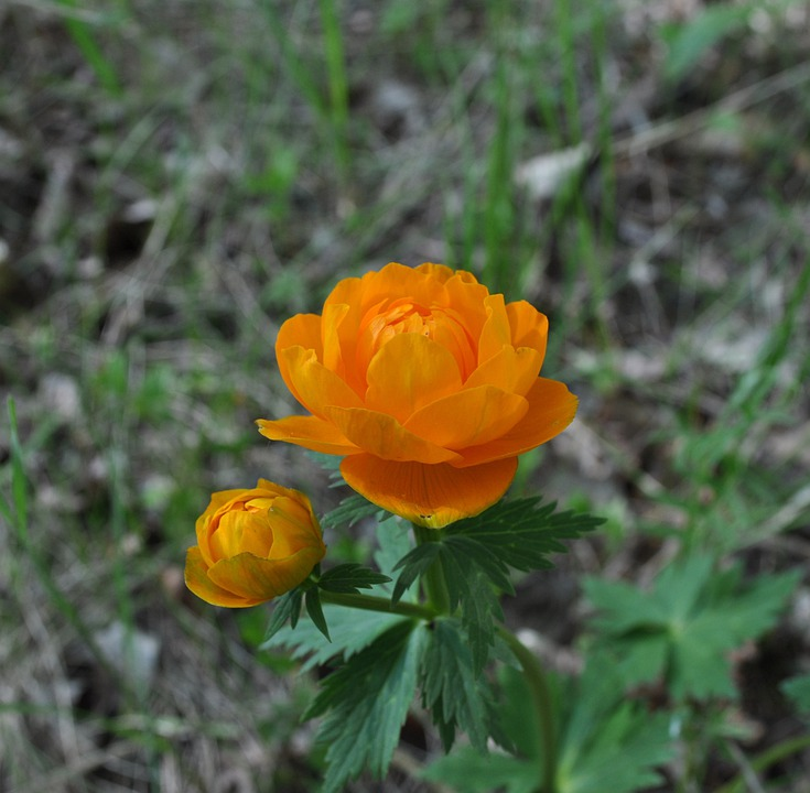 Flowers, Orange, Plant, Bloom, Floral, Petal, Yellow