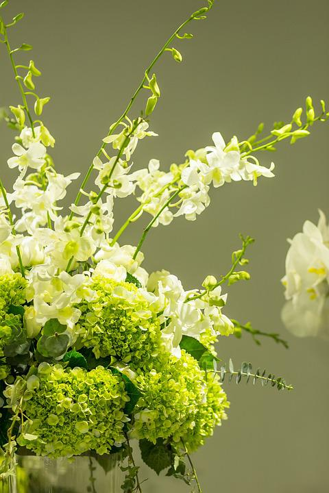 Flower Nice Blooming Beautiful Fresh Background