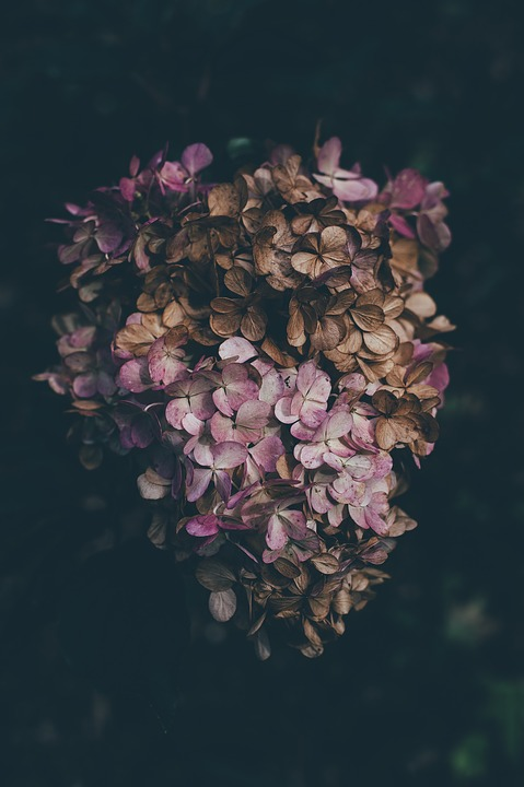 Beautiful, Bloom, Blooming, Blossom, Bouquet, Bundle