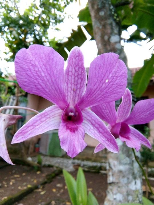 Nature, Flora, Flower, Garden, Blooming