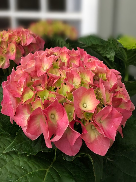 Flower, Nature, Flora, Garden, Leaf, Blooming, Floral