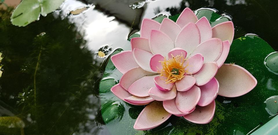 Flower, Nature, Flora, Garden, Blooming, Leaf