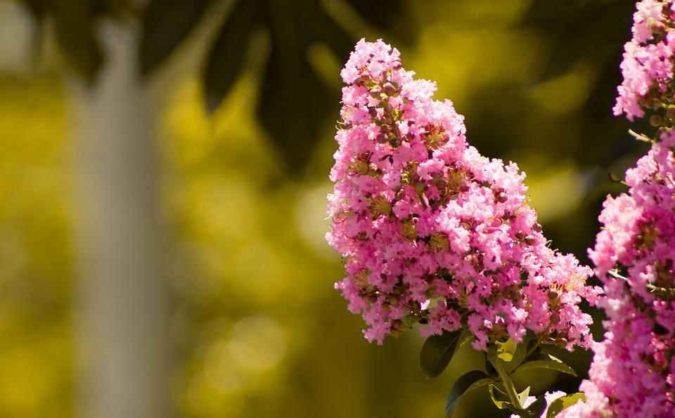 Flower, Nature, Flora, Leaf, Blooming, Petal, Garden