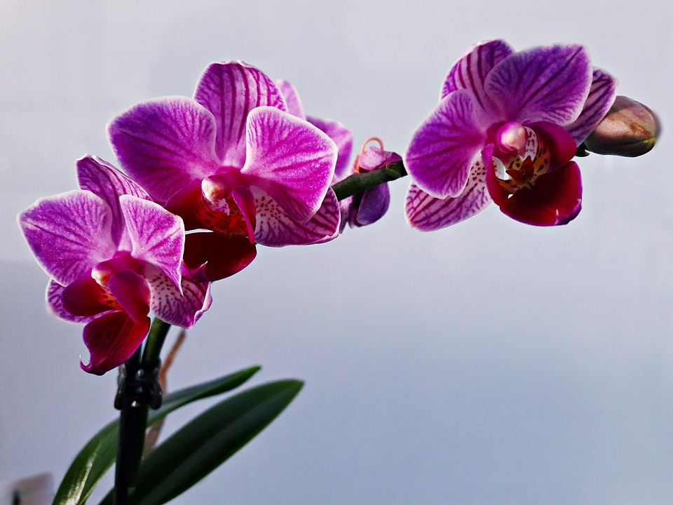 Flower, Orchid, Blooming, Flower Room, Nature