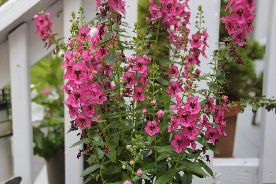 Free photo blooming pink flower spring plant purple summer max pixel pink flower purple plant spring summer blooming mightylinksfo