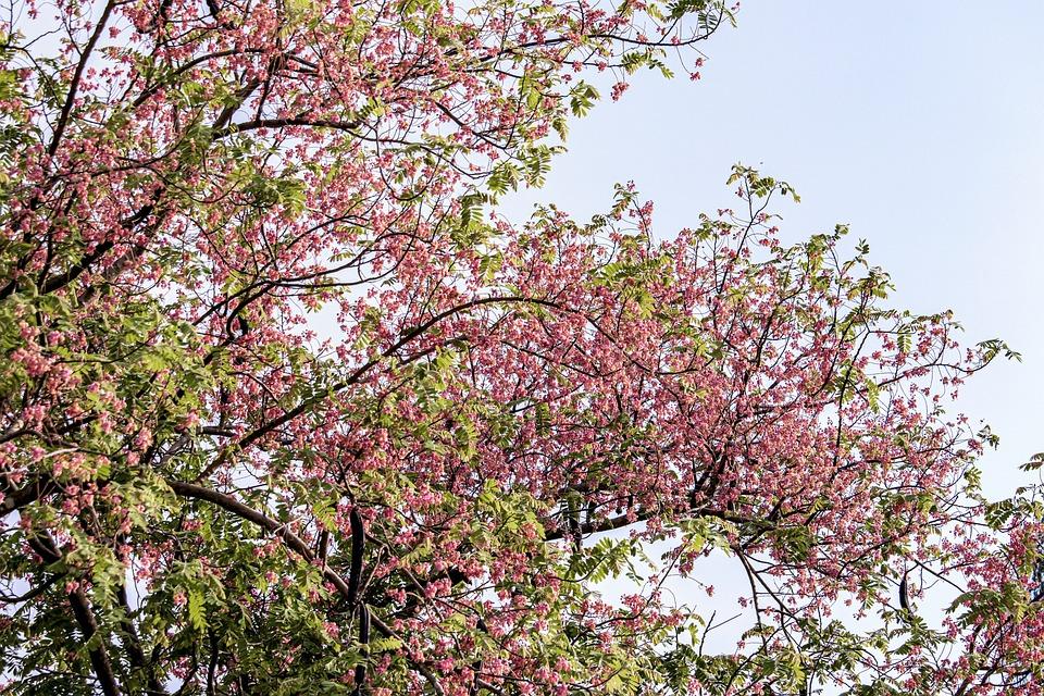 Pink, Petal, Plant, Flower, Blooming, Botany