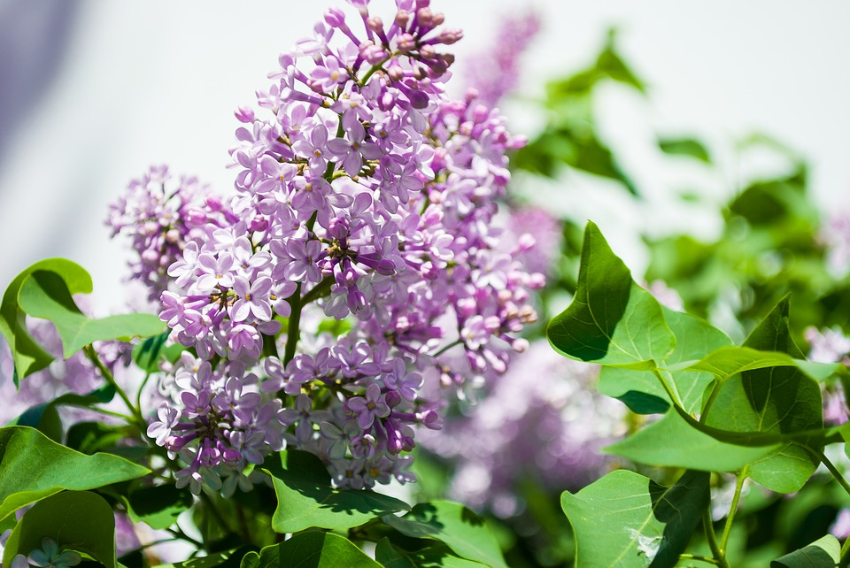 Flower, Plant, Nature, Sheet, Blooming, Tree, Outdoors