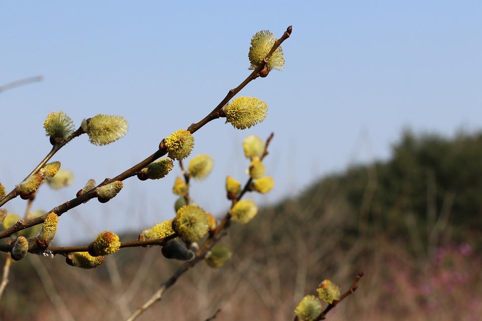 Spring, Flower, Nature, Bloom, Color, Floral, Blooming