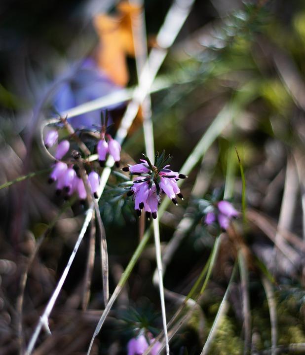 Flowers, Petals, Spring, Nature, Blooming, Flora