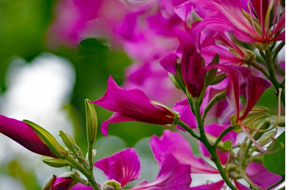 Azalea, Flower, Tree, Nature, Rhododendron, Blossom