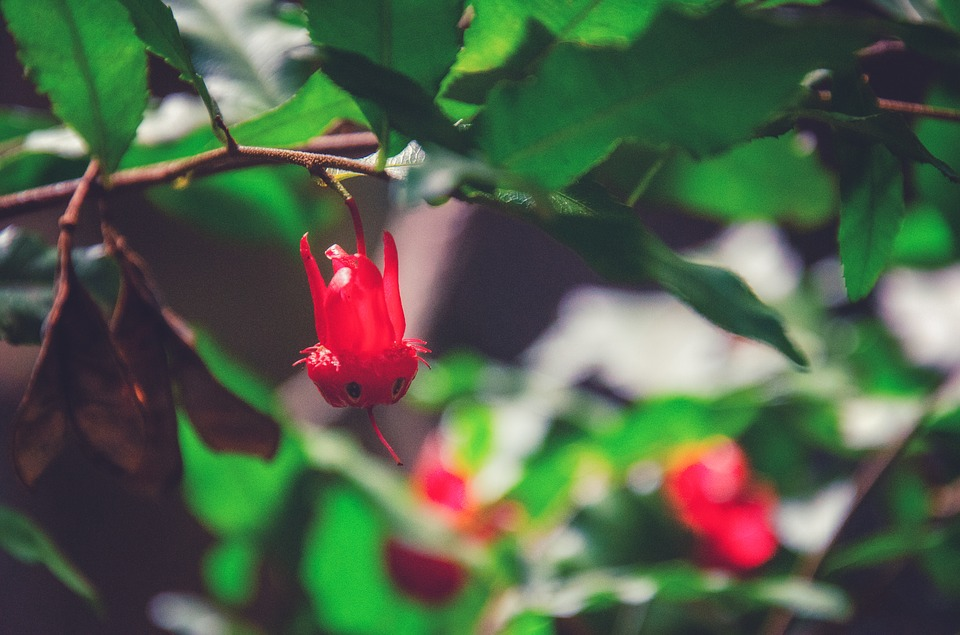 Red, Berry, Forest, Bloom, Blossom, Flowers, Garden