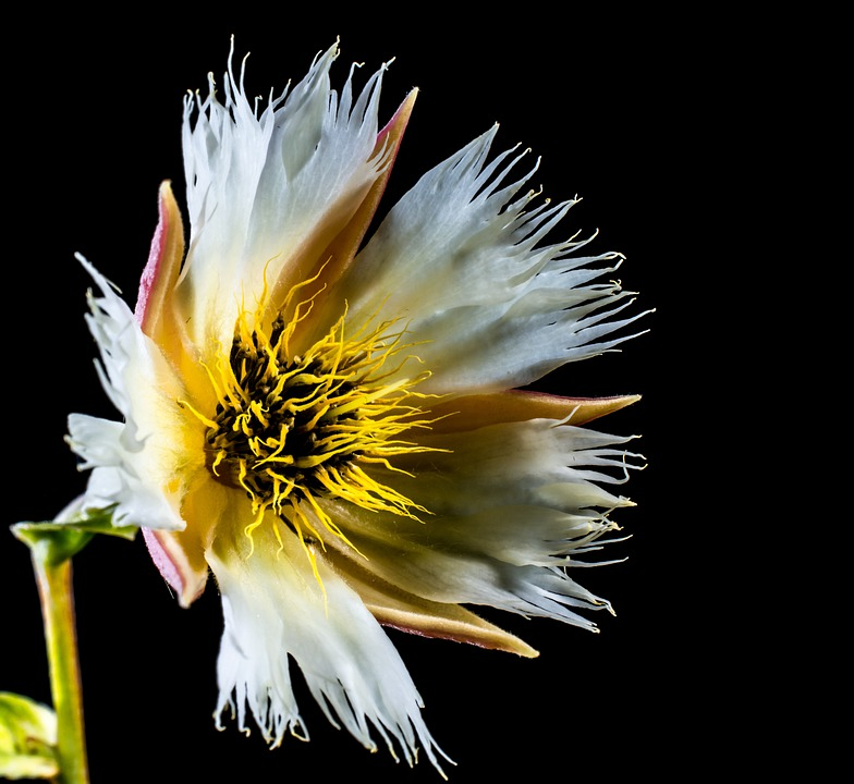 Blossom, Blossom, Bloom, White, Flowering Twig
