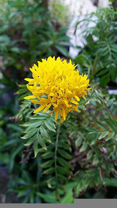 Flowers, Yellow Flowers, Leaves, Bloom, Blossom, Flora