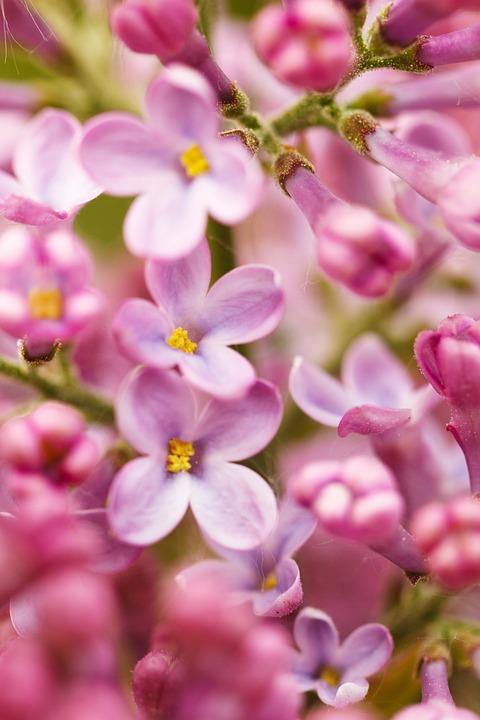 Bloom, Blooming, Blossom, Flora, Floral, Flower