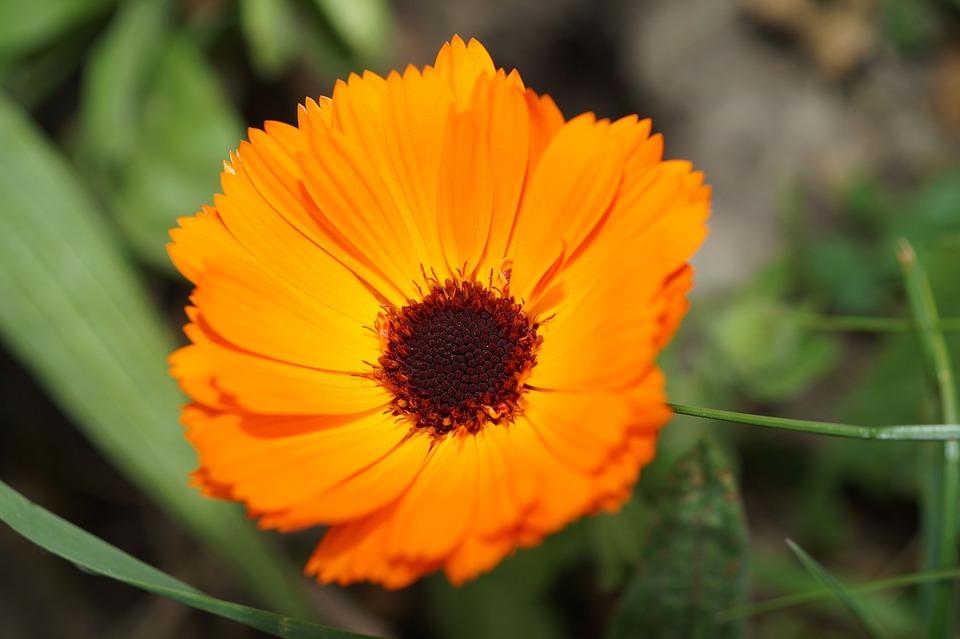 Blossom, Bloom, Flowers, Orange, Yellow
