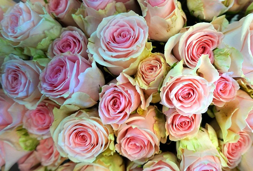 Roses, Blossom, Bloom, Romantic, Flowers, Flora