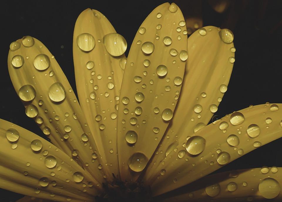Flower, Petals, Nature, Plant, Bloom, Blossom, Garden