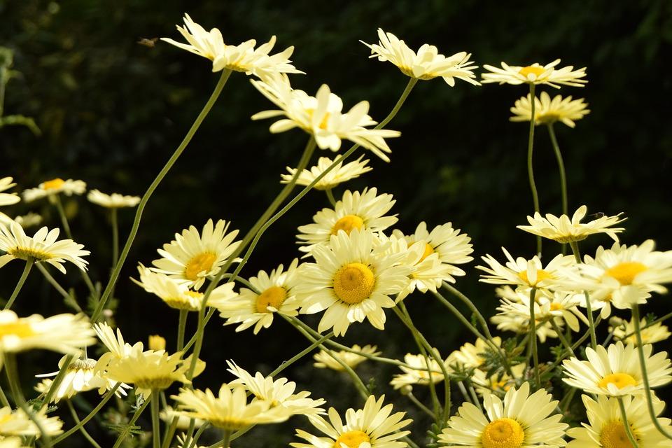 Flower, Plants, Nature, Bloom, Blossom