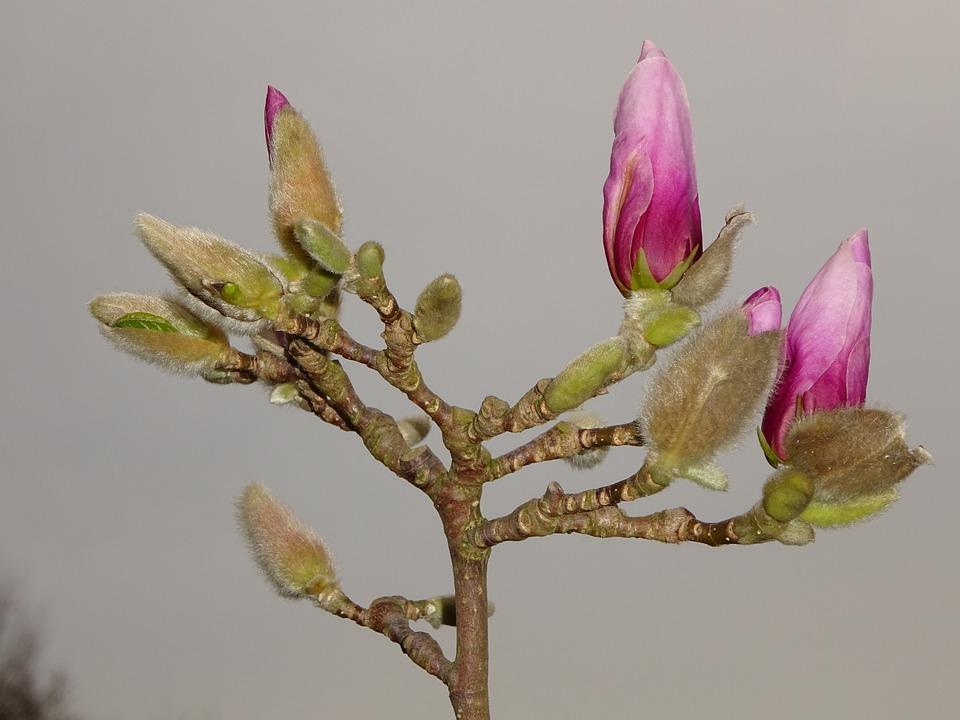 Spring, Blossom, Bloom, Bud, Nature