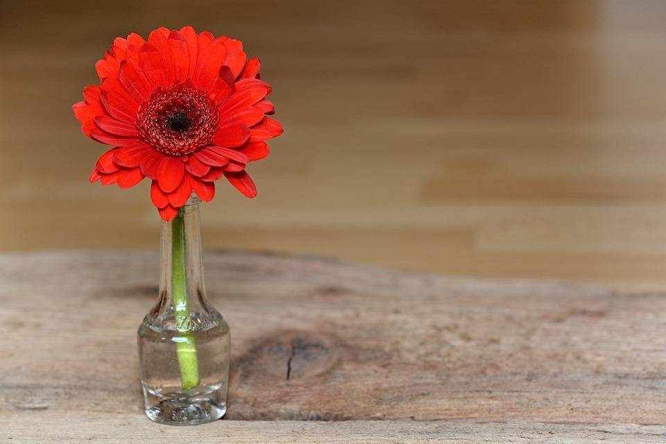 Gerbera, Red, Red Flower, Plant, Flower, Blossom, Bloom