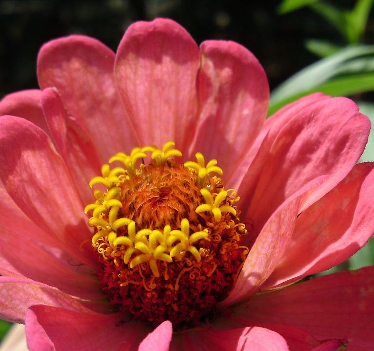 Flower, Blossom, Bloom, Nature, Plant, Spring