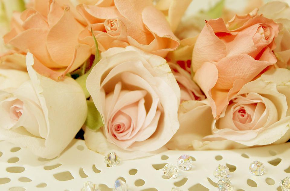 Roses, Plate, Romantic, Blossom, Bloom, Valentine's Day