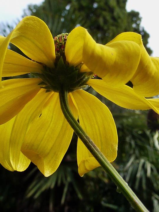Free photo blossom bloom white blossom white flower yellow max pixel blossom bloom flower yellow white blossom white mightylinksfo
