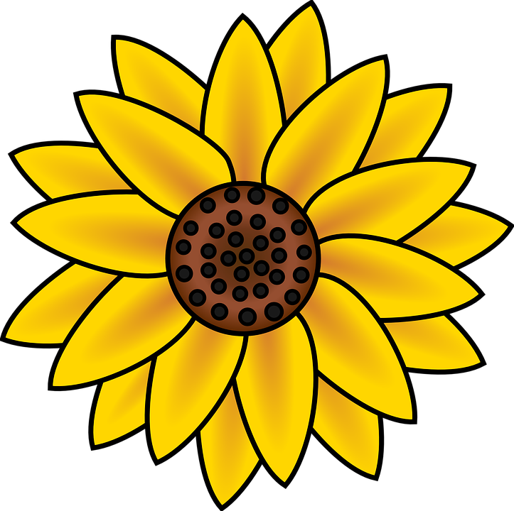 Sunflower, Blossom, Petals, Blooming, Flower, Nature