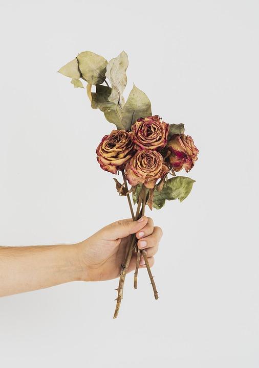 Arrangement, Beautiful, Bloom, Blossom, Botanical