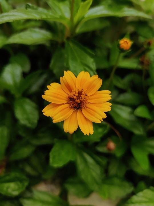 Flower, Bloom, Nature, Blossom, Botany, Plant
