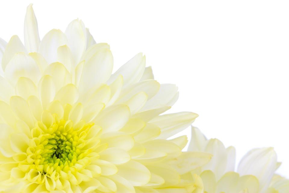 Bloom, Blossom, Border, Bright, Decorative, Floral
