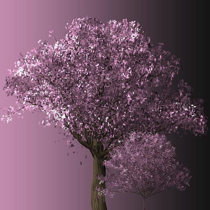 Cherry Blossom Tree, Cherry Blossom, Trees, Blossom