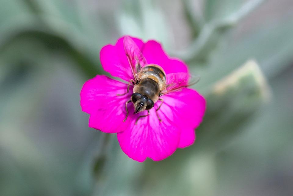 Blossom, Bloom, Violet, Flower, Purple, Close Up, Flora